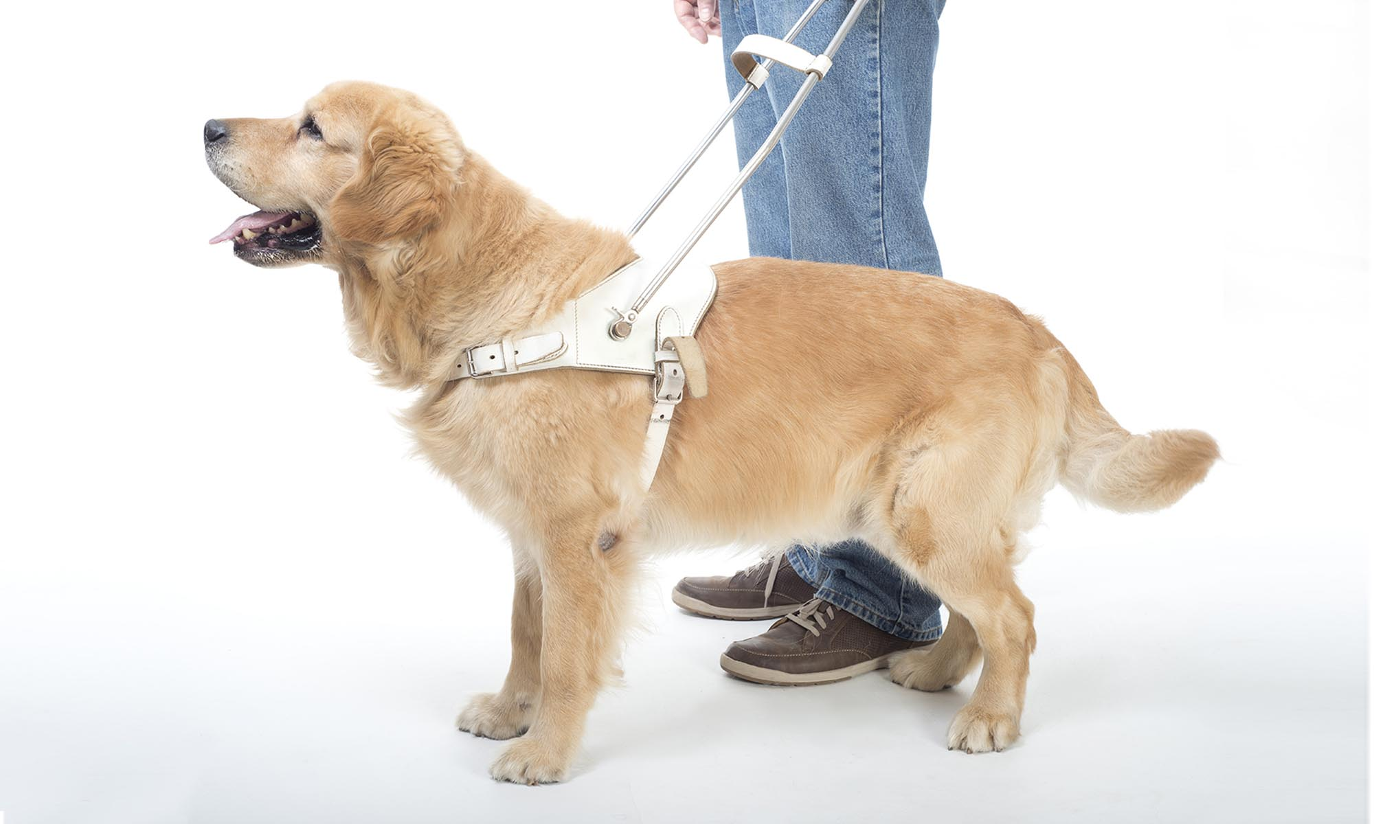 Tasks A Service Dog Can Perform